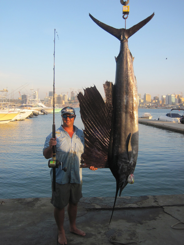 World Record Sail Fish 60.9 kg weighed on a Straightpoint Crane Scale