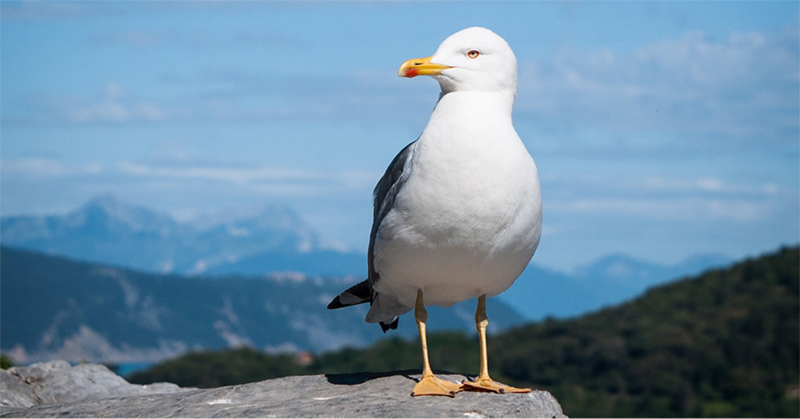 The-albatross-is-a-long-distance-forager